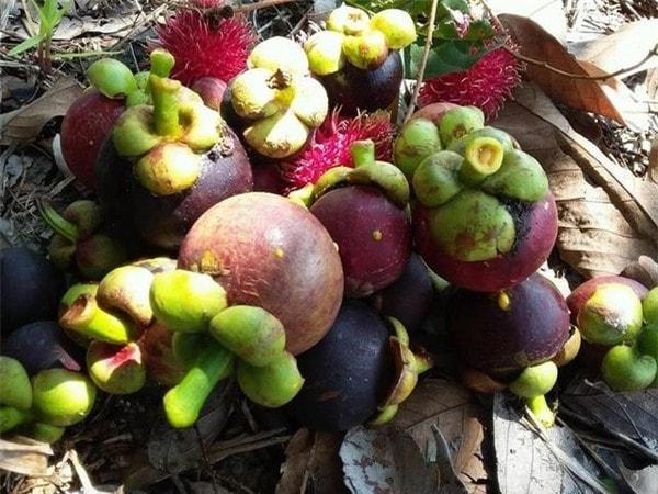 Không ăn trái cây cũng như thực phẩm sẫm màu