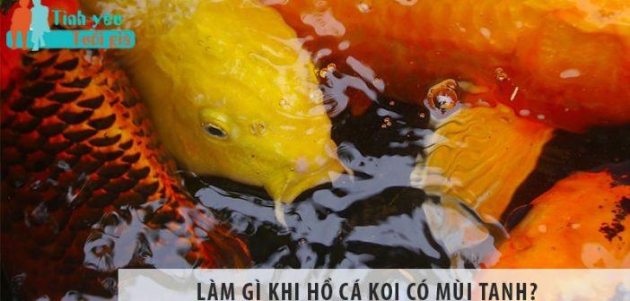Làm gì khi hồ cá Koi có mùi tanh?