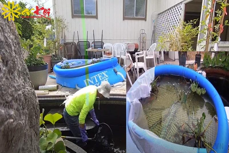 Thay nước cho hồ Koi để cải thiện tình trạng hồ Koi có mùi tanh